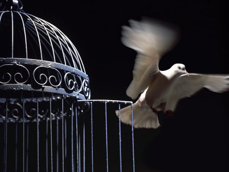 satriabajahitam.com | burung keluar sangkar