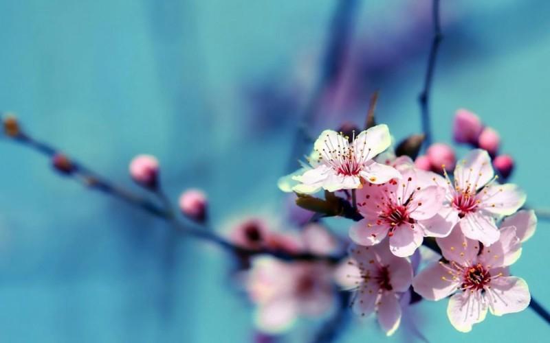 50 Wallpaper Gambar Bunga Cantik Untuk Laptop Satriabajahitam